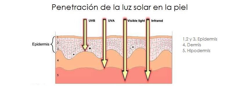 penetracion solar en la piel